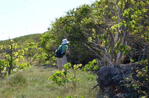 An image of Jean searching for birds on Isla Isabel off San Blas, Mexico. Photography by Frame To Frame - Bob and Jean.