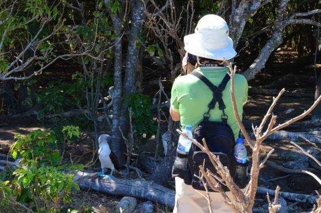 An image of Jean taking a picture of a blue-footed booby on Isla Isabel off San Blas, Mexico. Photography by Frame To Frame - Bob and Jean.
