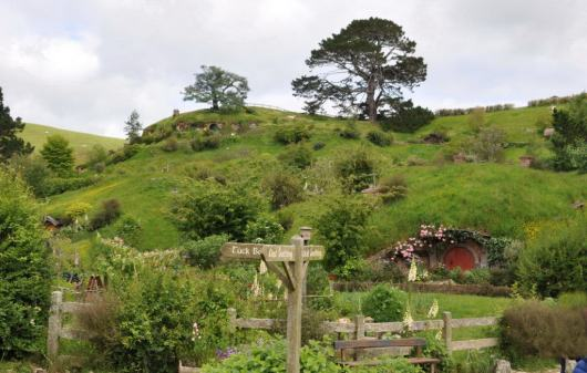 An image of the Party tree sitting on a hill high above the Shire at Hobbiton in New Zealand. Photography by Frame To Frame - Bob and Jean.