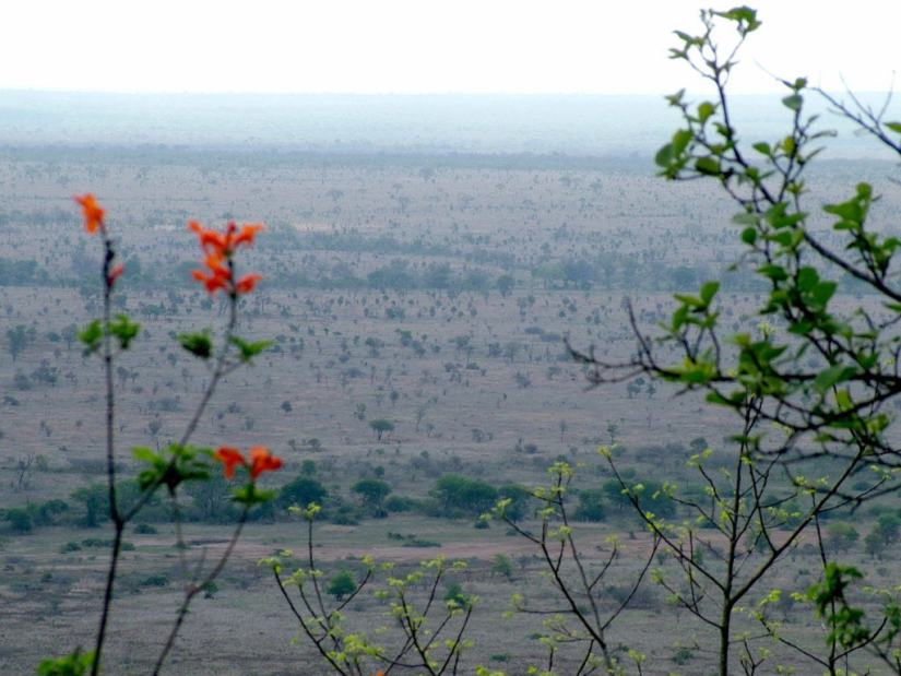 savanna-in-kruger-national-park-south-africa-pic-1