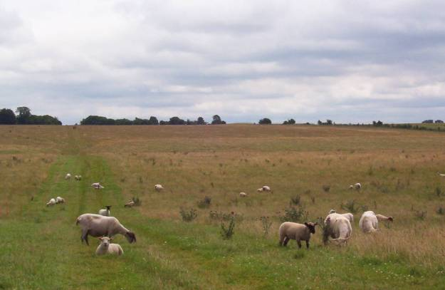 An image of sheep along a hiking trail near Stonehenge in Wiltshire, England.  Photography by Frame To Frame - Bob and Jean