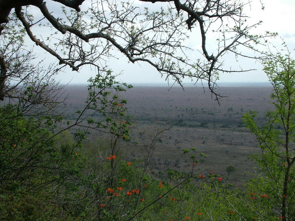 view-savanna-in-kruger-national-park-from-nkumbe-lookout-south-africa