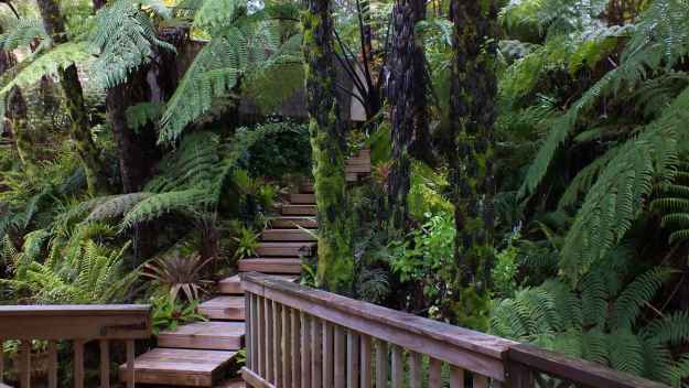 An image of the forest at Lone Kauri Lodge in the Waitakere Hills near Auckland, New Zealand.