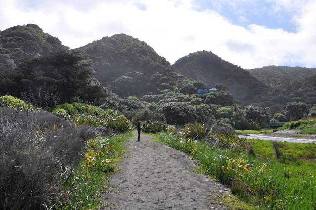An image of the walking trail along the Karekare Stream near Auckland, New Zealand.