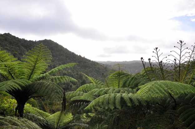 An image of the Waitakere Hills near Auckland, New Zealand.