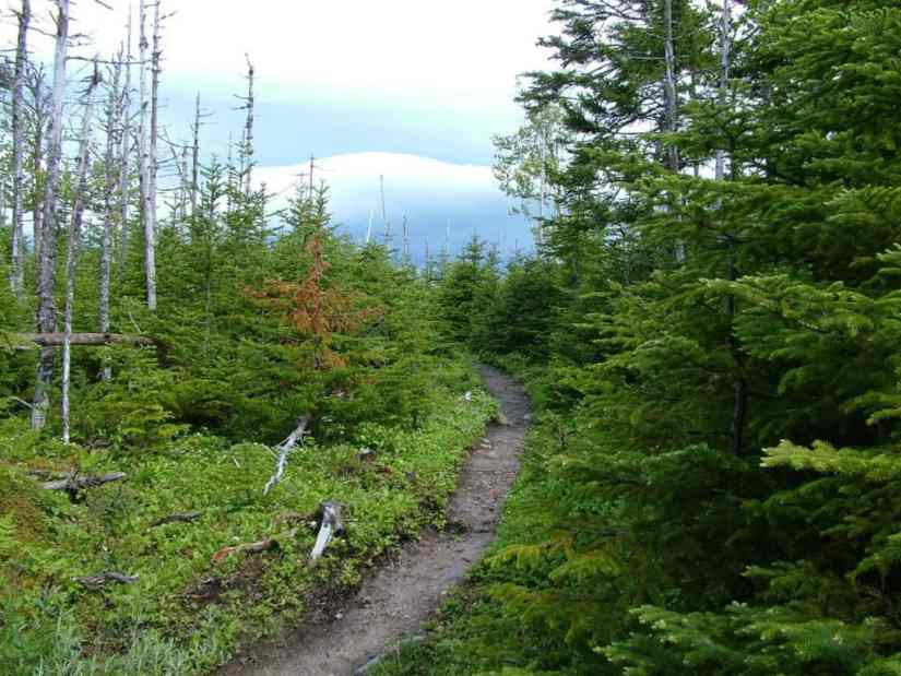 spruce and balsam forest along baker's brook falls trail, gros morne, newfoundland