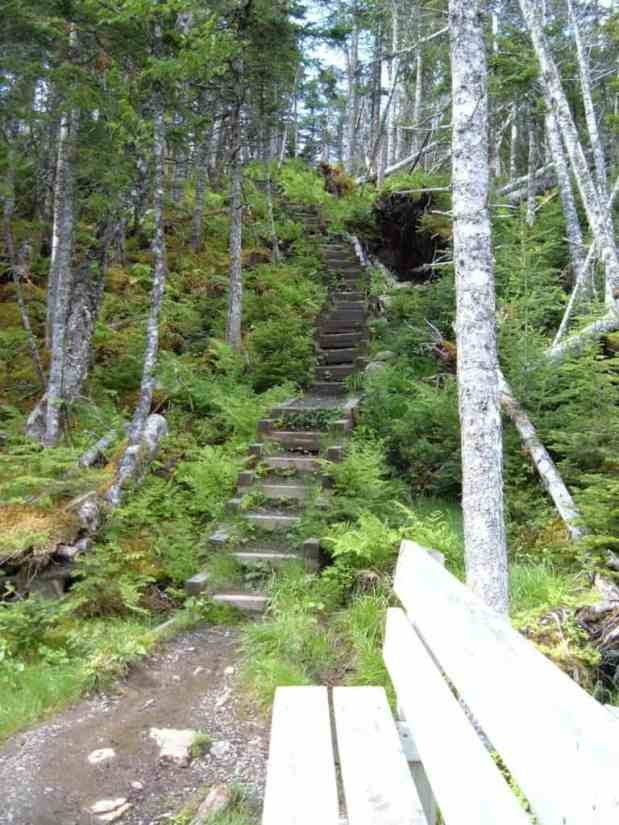 baker's brook falls hiking trail in gros morne national park, newfoundland