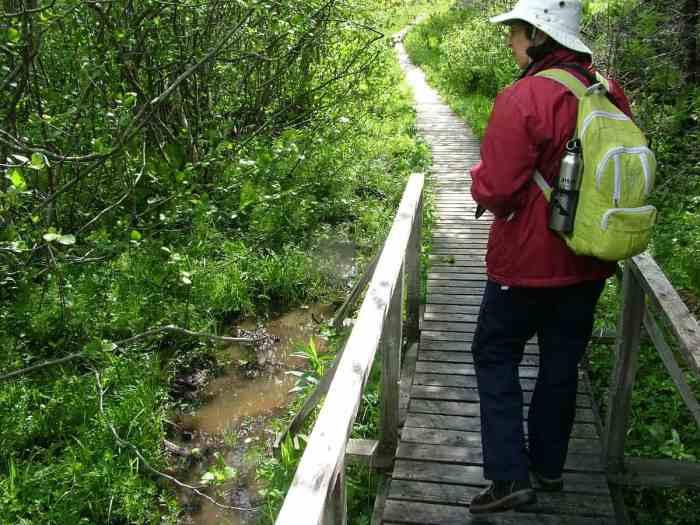 jean on a boardwalk along baker's brook falls trail, gros morne national park, newfoundland