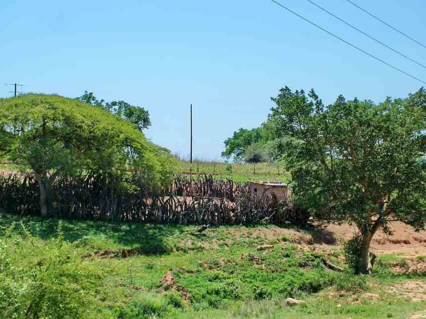 a traditional kraal in swaziland, africa