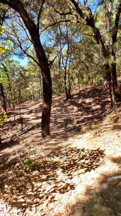 hiking trail in cerro de san juan ecological preserve near tepic, mexico