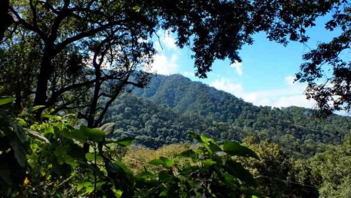 Hillside and trees in Cerro de San Juan Ecological Reserve, Mexico.
