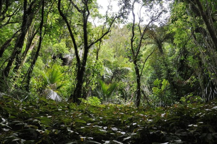 jungle plants, ark in the park, waitakere ranges regional park, north island, new zealand