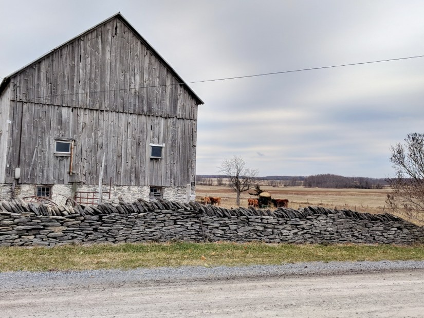 A stone fence and country barn on Amherst Island, Ontario, Canada.