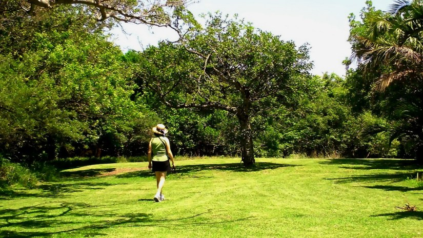 the grounds at hilltop camp, hluhluwe-imfolozi, south africa