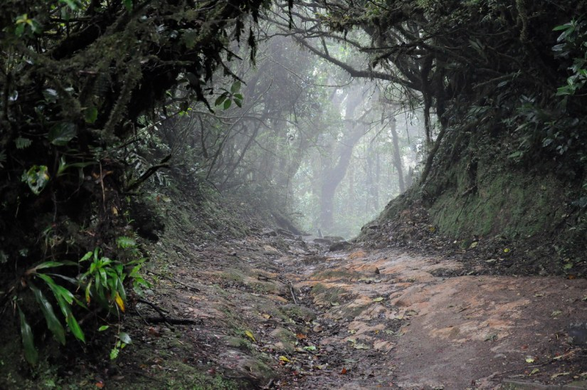 a foggy trail, monteverde cloud forest preserve, costa rica