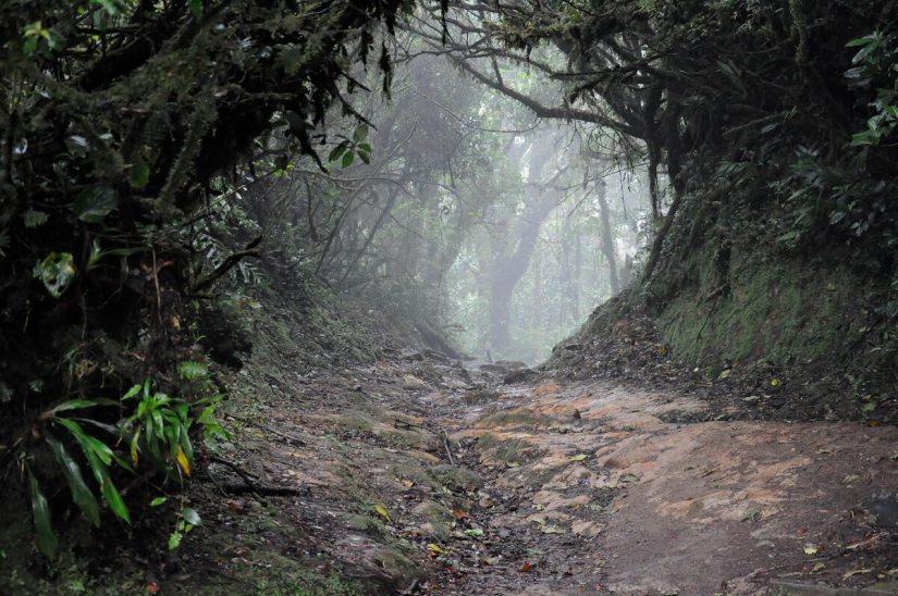 a foggy trail, monteverde cloud forest preserve, costa rica