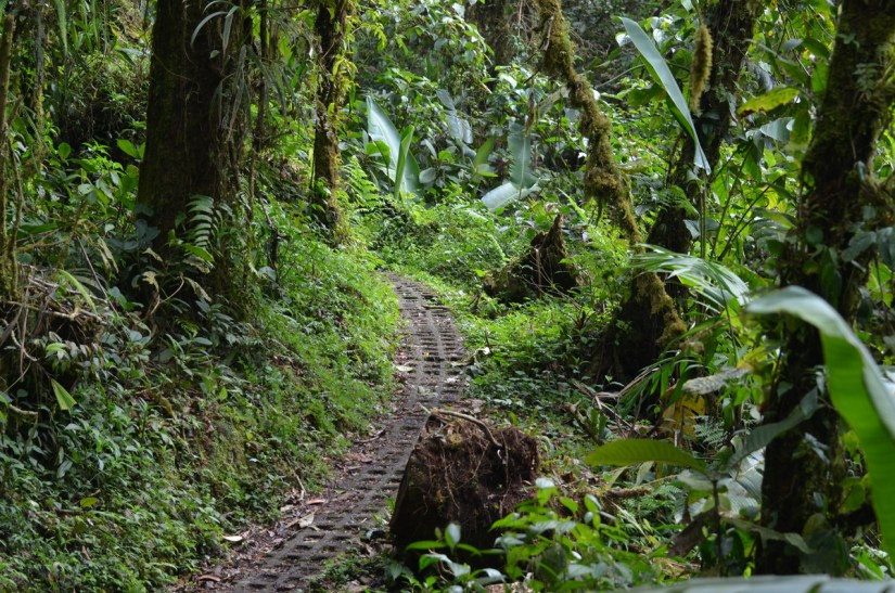 a trail in the cloud forest, monteverde, costa rica