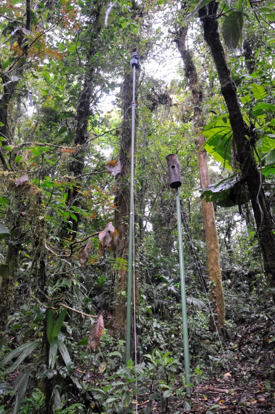 a man-made nest box, monteverde cloud forest preserve, costa rica