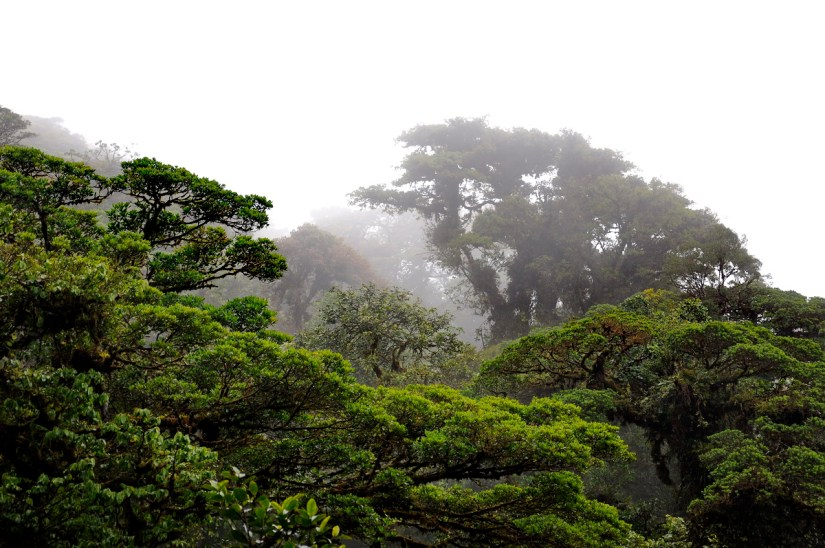 mist in the cloud forest, monteverde cloud forest preserve, costa rica