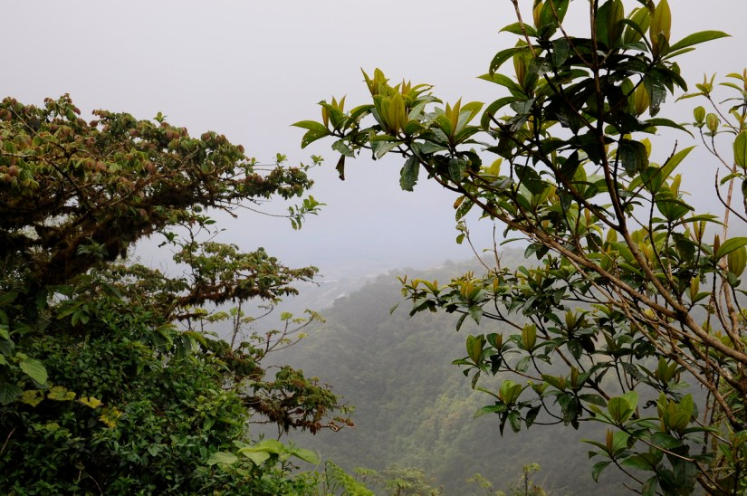 a view from the continental divide, monteverde cloud forest preserve, costa rica