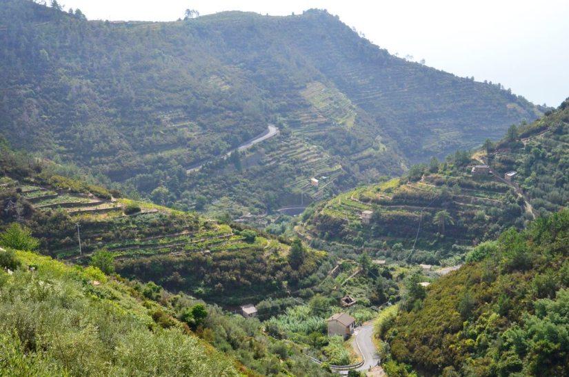 terraced vineyards, cinque terre, italy