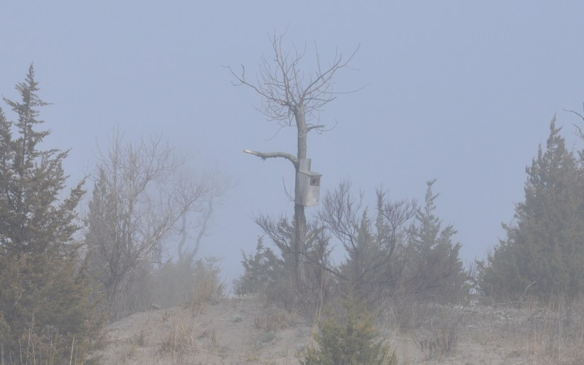a nest box, the tip of long point, lake erie, ontario