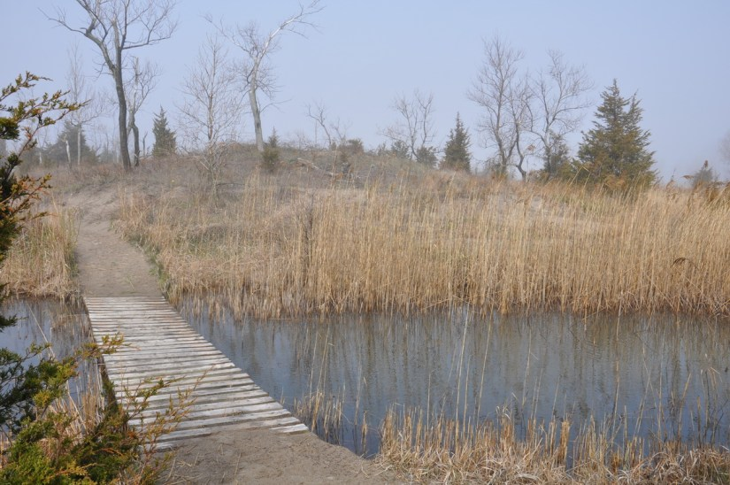 a boardwalk across a pond, the tip of long point, lake erie, ontario