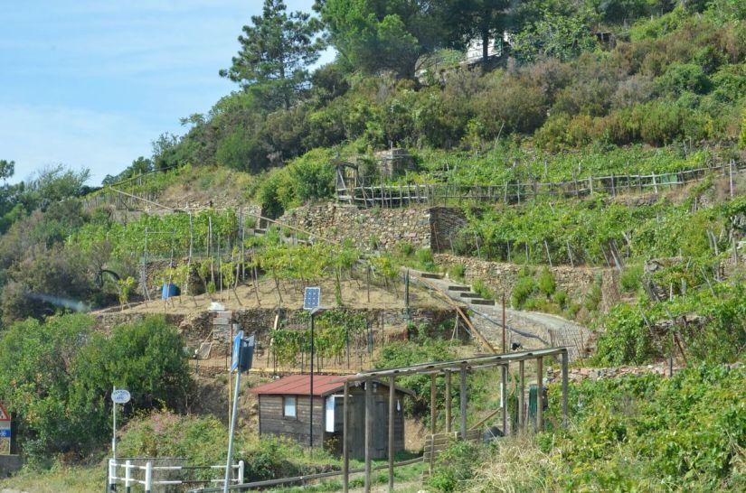 dry stone walls, cinque terre, italy