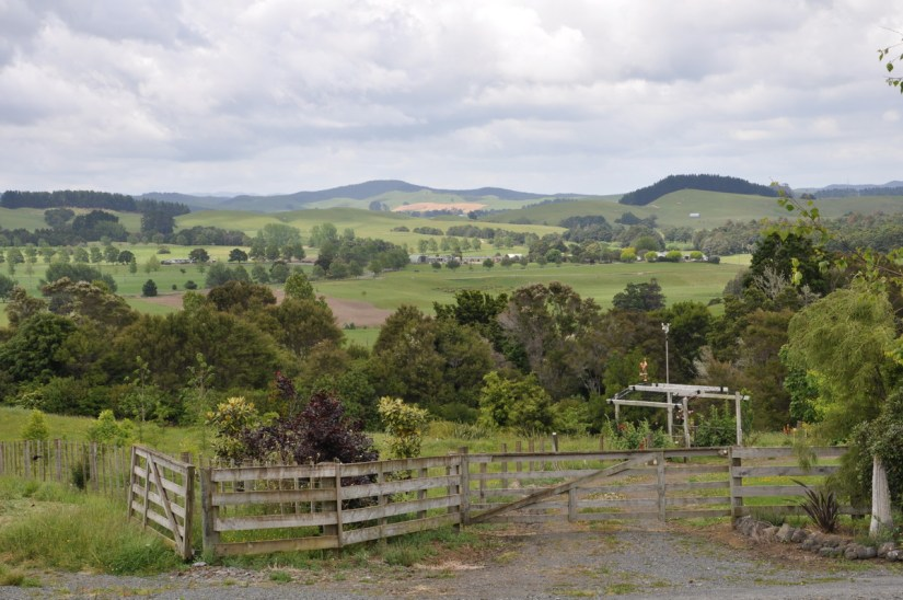 rolling hills and woodlots near auckland, new zealand
