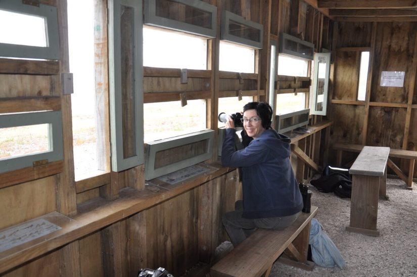jean inside the bird blind, Pukorokoro Miranda Shorebird Centre, north island, new zealand