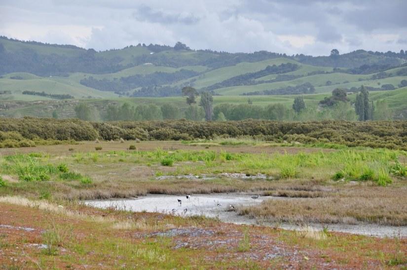 rolling hills and saltmarsh, Pukorokoro Miranda Shorebird Centre, north island, new zealand