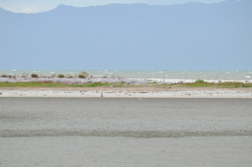 a shell bank or shell bar, Pukorokoro Miranda Shorebird Centre, north island, new zealand