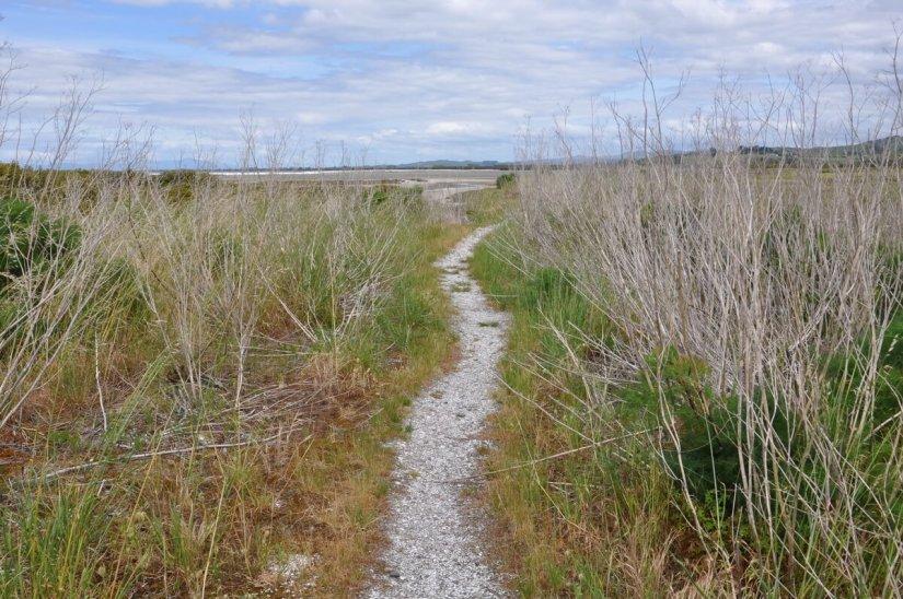 hiking trail, Pukorokoro Miranda Shorebird Centre, north island, new zealand