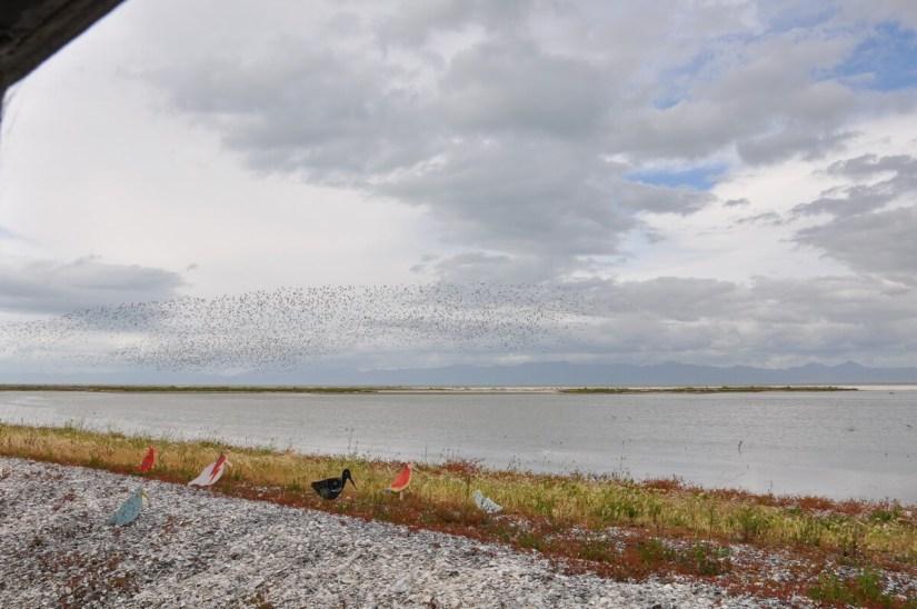 a view from the bird blind, Pukorokoro Miranda Shorebird Centre, north island, new zealand