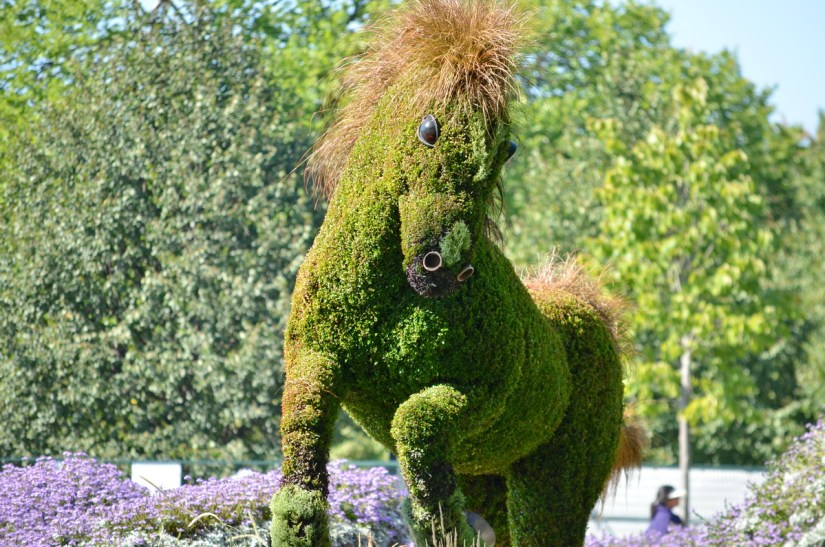 the canadian horse, mosaiculture 2018, gatineau, quebec, canada
