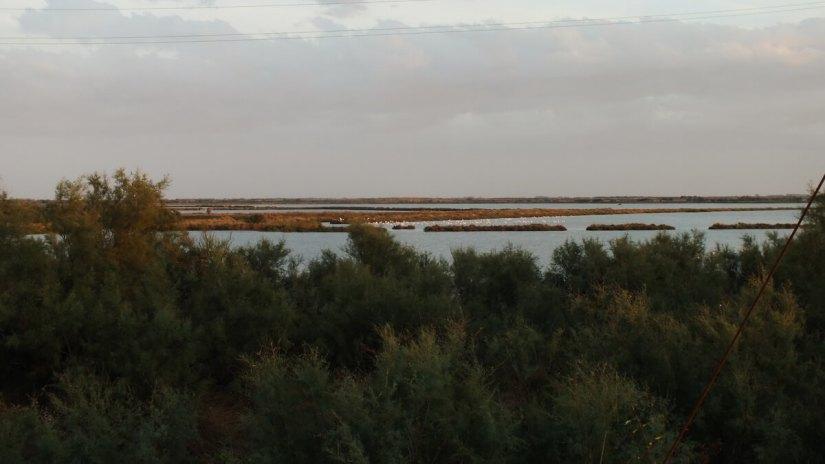 a flamingo colony, Parco Regionale Veneto del Delta del Po (The Regional Park of the Po River Delta), italy