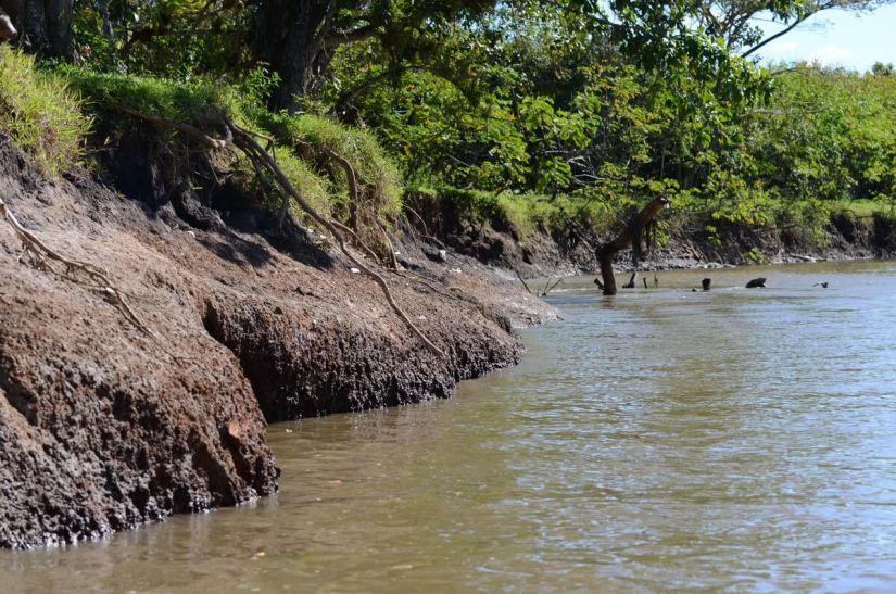 banks of rio frio, cano negro wildlife refuge, costa rica