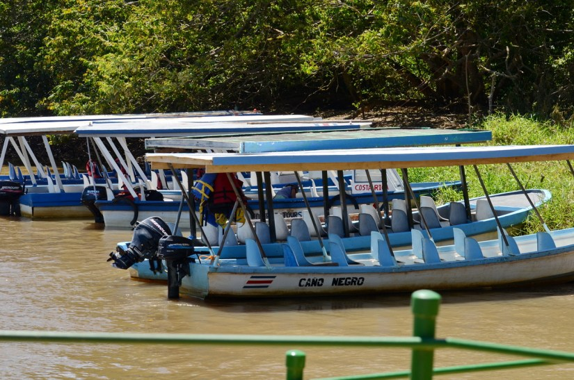 a flotilla of tour boats, river frio, cano negro wildlife refuge, costa rica