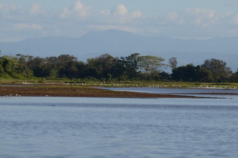 cano lago lagoons, cano negro wildlife refuge, costa rica