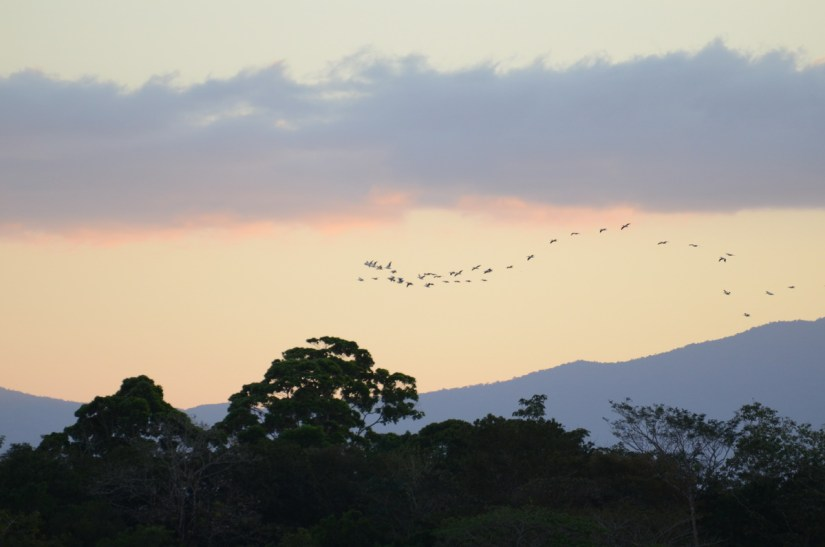 sunset view of trees and birds, cano negro wildlife refuge, costa rica