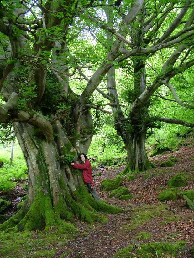 jean hugging a massive ancient tree, glenariff forest park, northern ireland