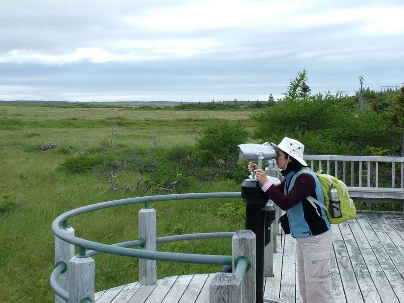 jean at an observation deck near western brook pond, gros morne national park, newfoundland, canada