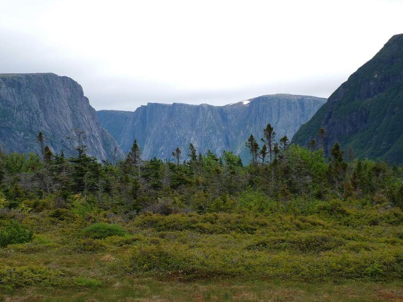 balsam fir and spruce trees near western brook pond, gros morne national park, newfoundland, canada