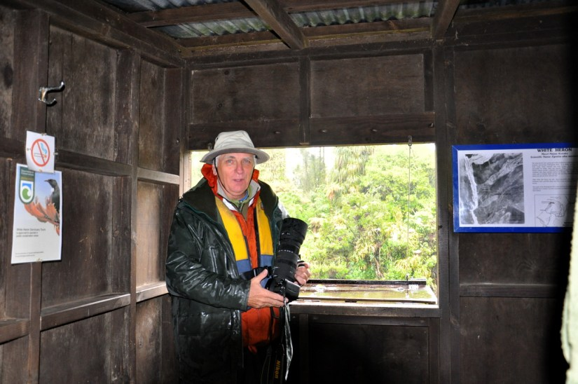 bob inside the bird hide, white heron sanctuary. south island, new zealand