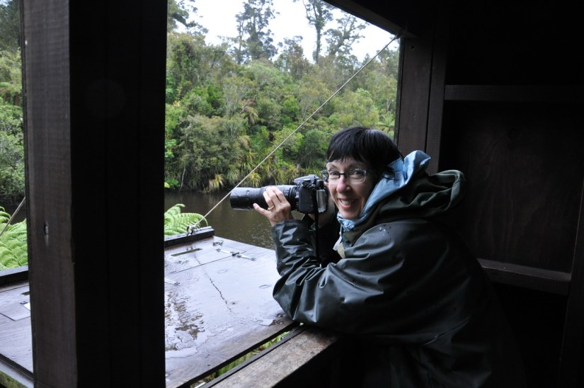 jean in the bird hide, white heron sanctuary, south island, new zealand