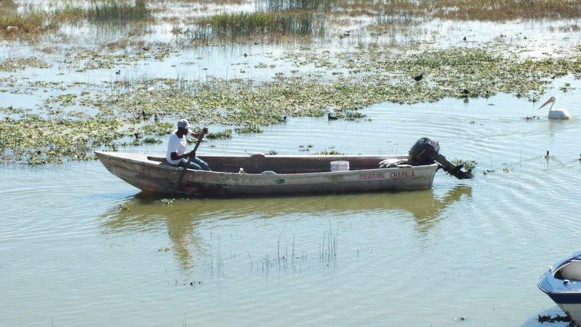 a fisherman poling his boat, lake chapala, mexico