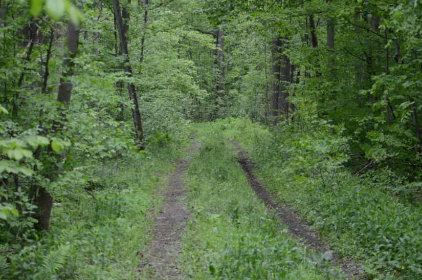 trail in rouge national urban park, toronto