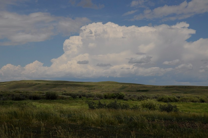 mixed grass prairie, grasslands national park, saskatchewan