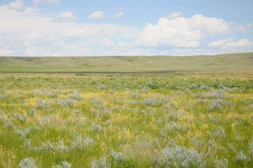 tall grass prairie, grasslands national park, saskatchewan