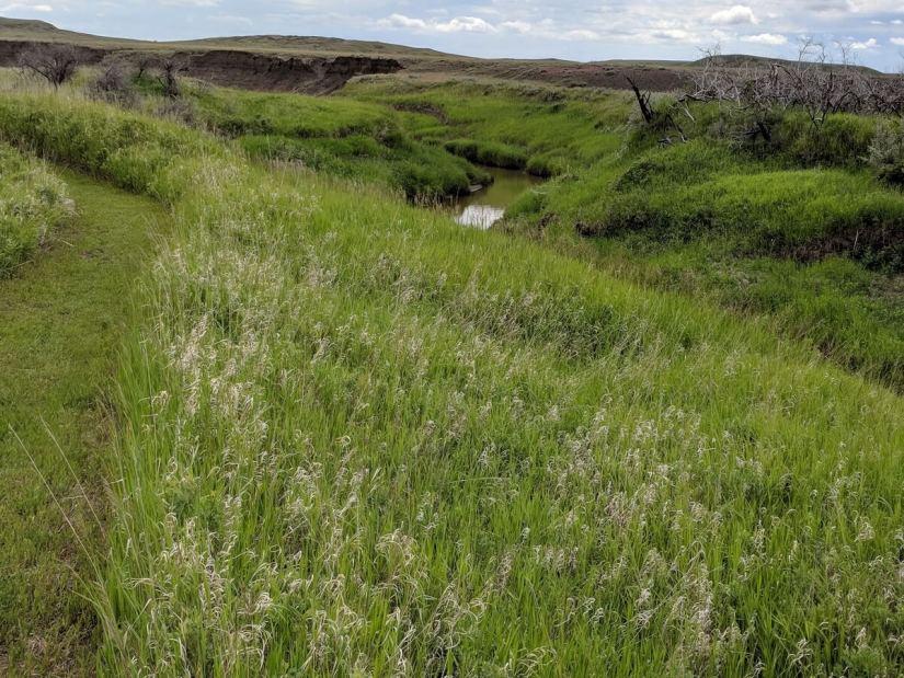 the riverwalk trail, grasslands national park, saskatchewan